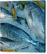 Santorini  Island Fresh  Dorados Canvas Print