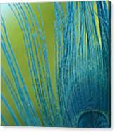 Sapphire 2 Canvas Print