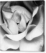 Sapphire Rose Bw Palm Springs Canvas Print