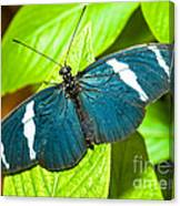 Sara Butterfly Canvas Print