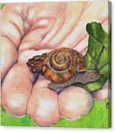 Sarah's Snail Canvas Print