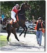 Saratoga Race Track Paddock Canvas Print