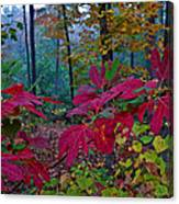 Sassafras Tea Anyone Canvas Print
