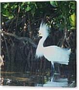 Sassy Snowy Egret Canvas Print