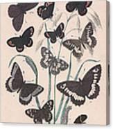 Satyridae Canvas Print