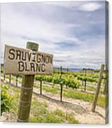 Sauvignon Blanc Grapes Growing In Vineyard Canvas Print