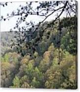 Savage Gulf Tennessee State Park Canvas Print