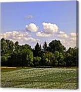 Savie Island Flower Garden Canvas Print