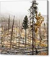 Sawback Burn, On Bow Valley Parkway Canvas Print