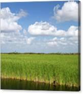 Sawgrass In The Florida Everglades Canvas Print