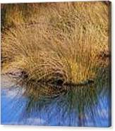 Sawgrass Canvas Print