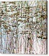 Sawgrass Swamp Panorama Canvas Print