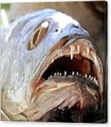 Fanged Fish Say Ahhhhhh Canvas Print