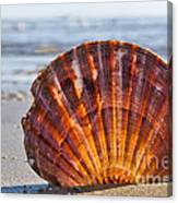 Scallop Shell 2 Canvas Print