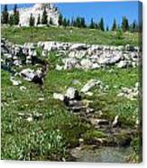 Scapegoat Amphitheater And Spring Canvas Print