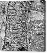 Cicatrix Canvas Print