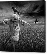 Scarecrow And Black Crows Over A Cornfield Canvas Print