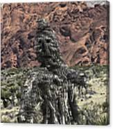 Scarecrow Cactus Canvas Print