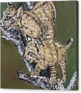 Scaredy Bobcats Canvas Print