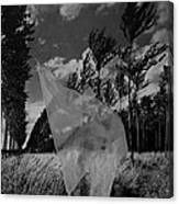 Scarf In The Winds In Black And White Canvas Print