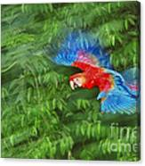 Scarlet Macaw Juvenile In Flight Canvas Print