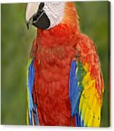 Scarlet Macaw Parrot Canvas Print