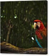 Scarlet Macaw Profile Canvas Print