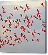 Scarlet Sky Canvas Print