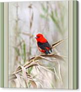 Scarlet Tanager 3630-10-ttp Canvas Print