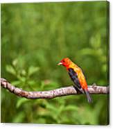 Scarlet Tanager On Snag Canvas Print