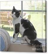 Scarlow Sitting In The Window Canvas Print