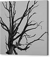 Scary Tree IIi Canvas Print