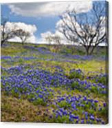 Scattered Bluebonnets Canvas Print