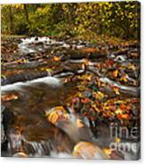Scattered Leaves Canvas Print