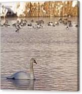 Scene At The Lake Canvas Print