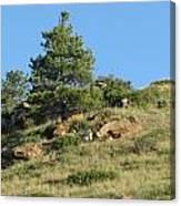 Scenic Hillside Canvas Print