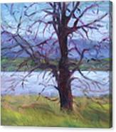Scenic Landscape Painting Through Tree - Spring Has Sprung - Color Fields - Original Fine Art Canvas Print