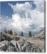 Scenic View In Yosemite National Park Canvas Print