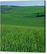 Scenic View Of A Field, South Downs Canvas Print