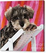Schnauzer Puppy Looking Over Top Canvas Print