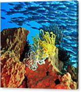 School Of Fishes Canvas Print