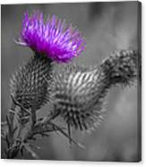 Scotland Calls 1 Canvas Print