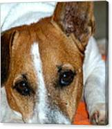 Scrappy The Jack Russell Canvas Print
