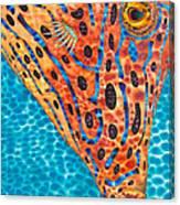 Scrawled File Fish Canvas Print