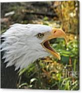 Screaming Eagle Canvas Print