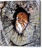 Screech Owl 02 Canvas Print