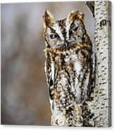 Screech Owl Checking You Out Canvas Print