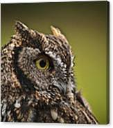 Screech Owl 1 Canvas Print