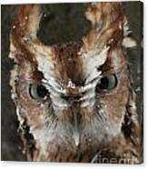 Screech Owl Portrait Canvas Print
