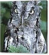 Screech Owl Straight On Canvas Print